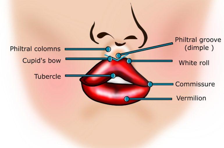 Do Dental Hygienists do Lips?